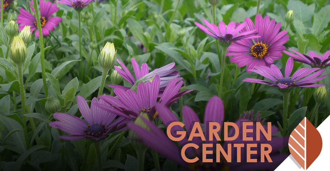 Garden Center text overlaid on photo of flowers