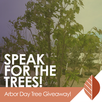 thumbnail image for blog post: Speak for the trees