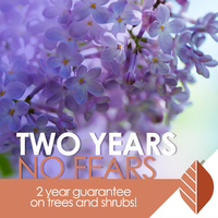 thumbnail image for blog post: Two Years No Fears