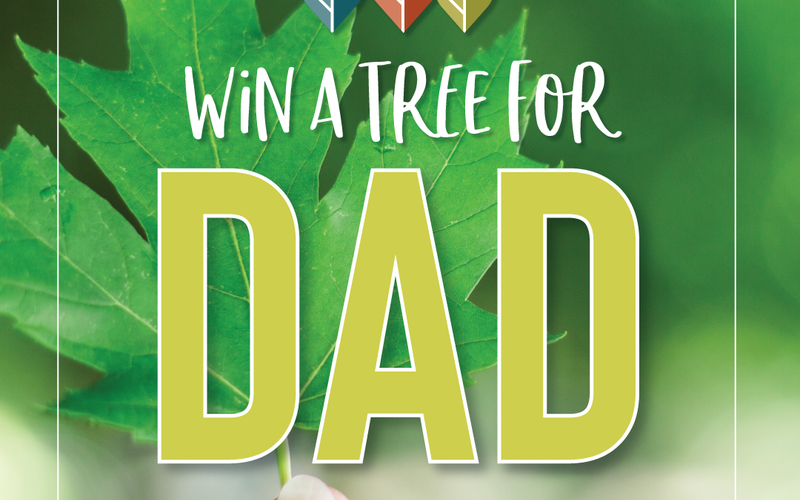 thumbnail image for blog post: Win A Tree For Dad!